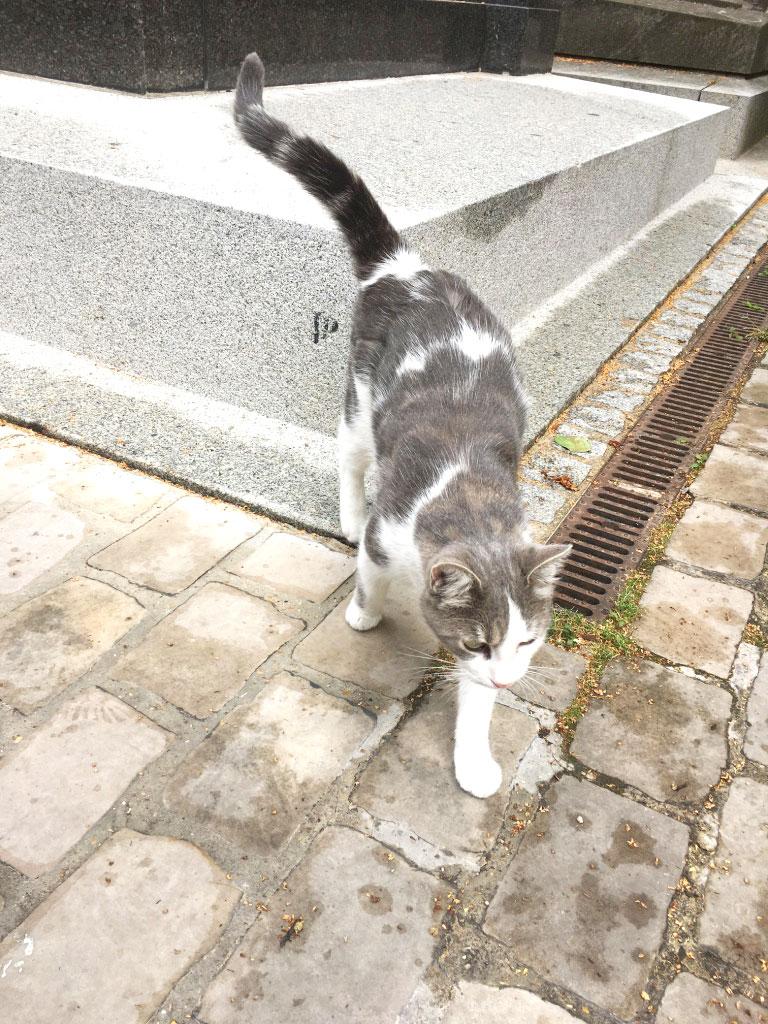 chats, cimetière de Montmartre
